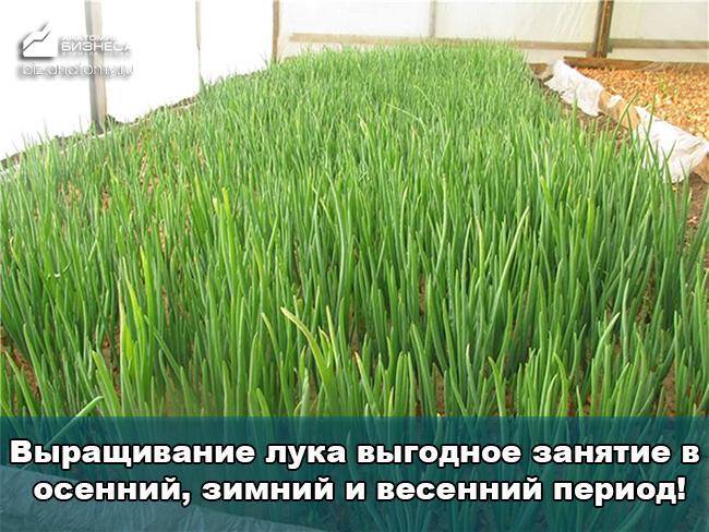 idei-domashnego-biznesa-dlya-zhenshhin-4