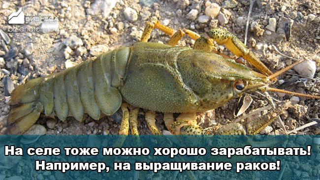 biznes-idei-dlya-selskoj-mestnosti-1
