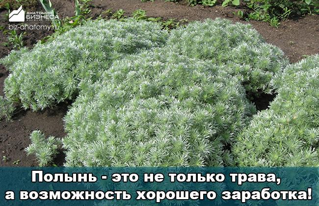 biznes-idei-dlya-selskoj-mestnosti-3