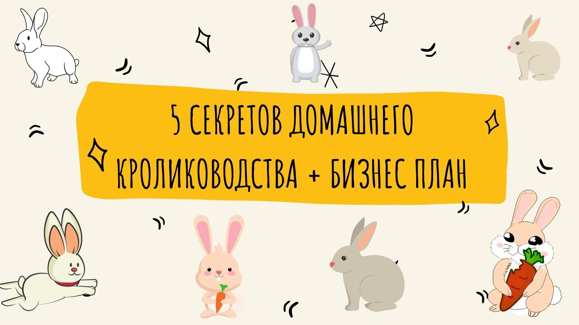 5 секретов домашнего кролиководства + бизнес план